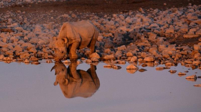 namibija-in-bocvana-2016-1802