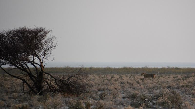 namibija-in-bocvana-2016-1820