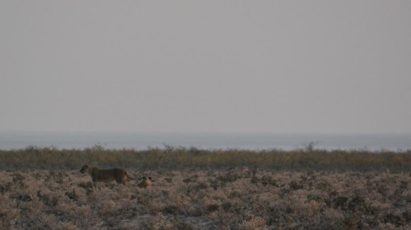 namibija-in-bocvana-2016-1822