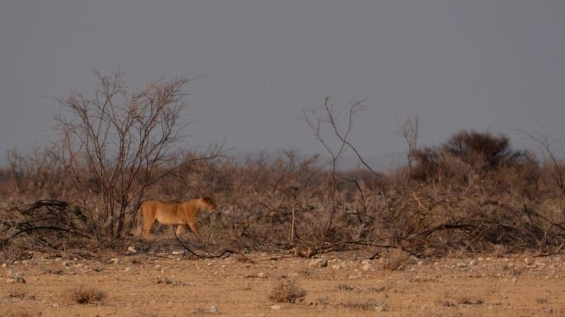namibija-in-bocvana-2016-1846