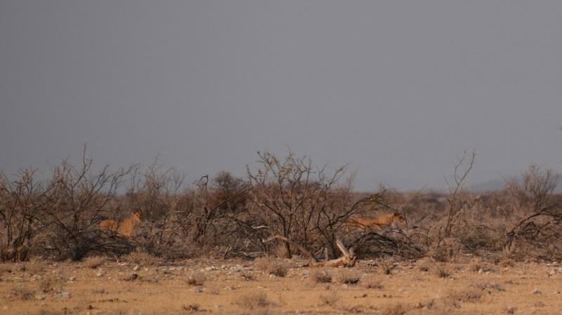 namibija-in-bocvana-2016-1849