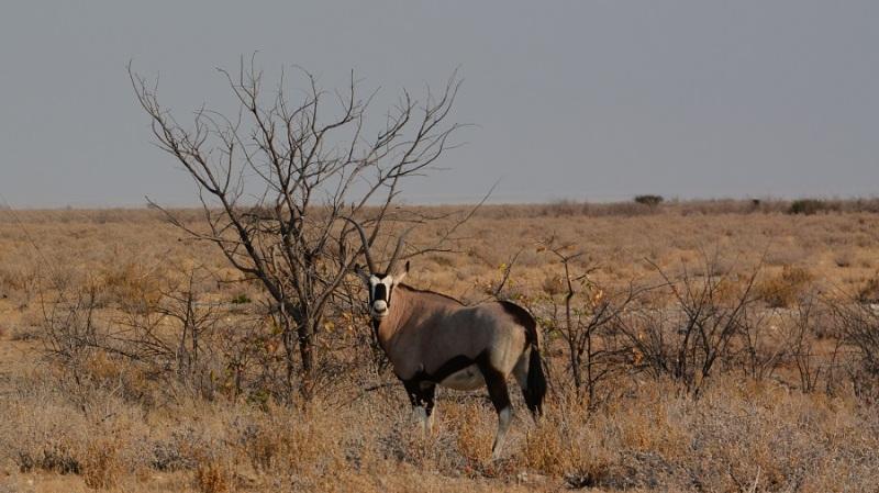 namibija-in-bocvana-2016-1876