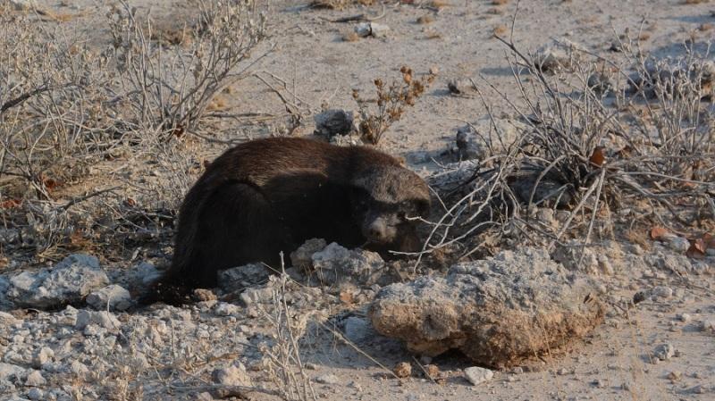 namibija-in-bocvana-2016-1882