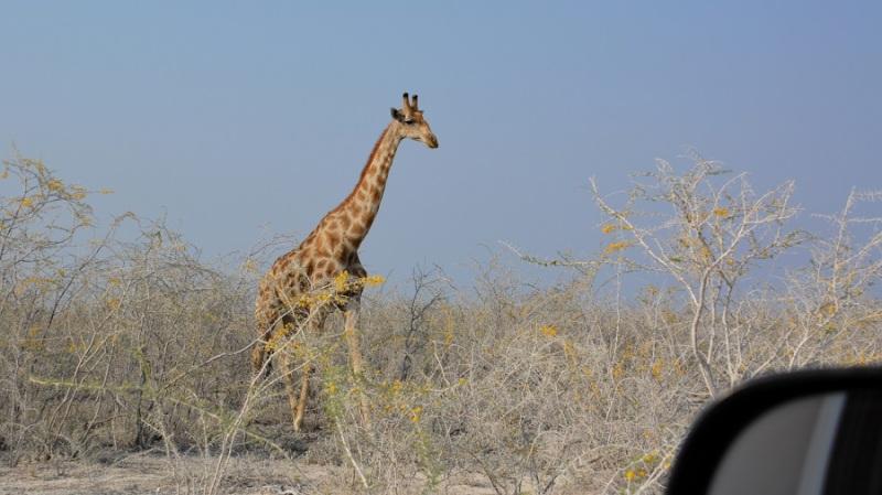namibija-in-bocvana-2016-1915