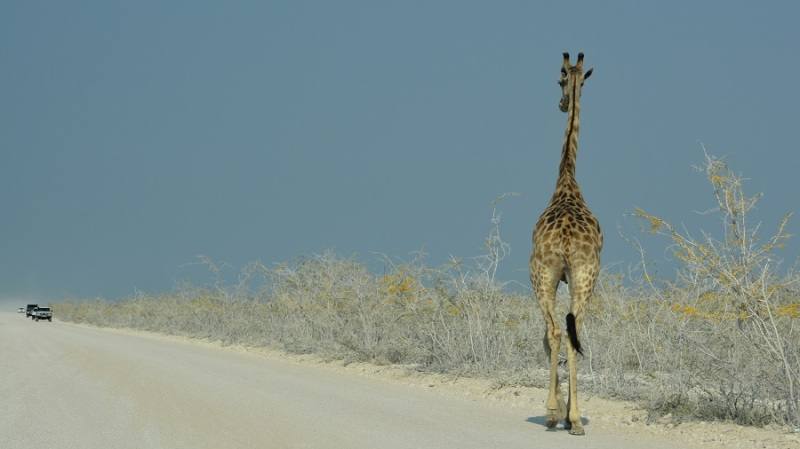 namibija-in-bocvana-2016-1916