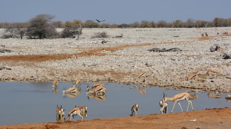 namibija-in-bocvana-2016-1953