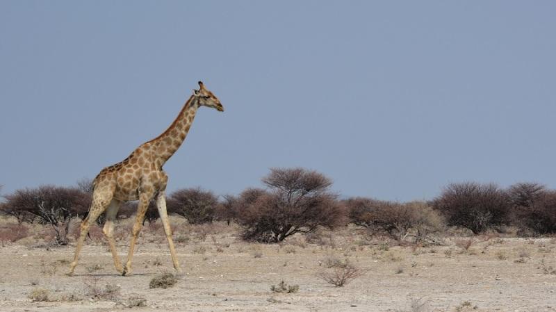 namibija-in-bocvana-2016-1970