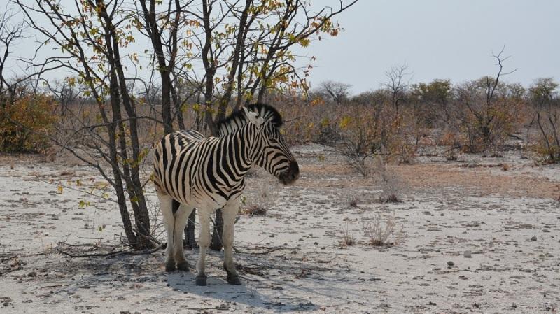 namibija-in-bocvana-2016-1975