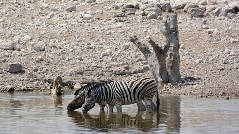 namibija-in-bocvana-2016-2000