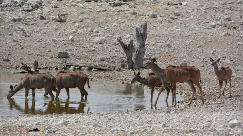 namibija-in-bocvana-2016-2003