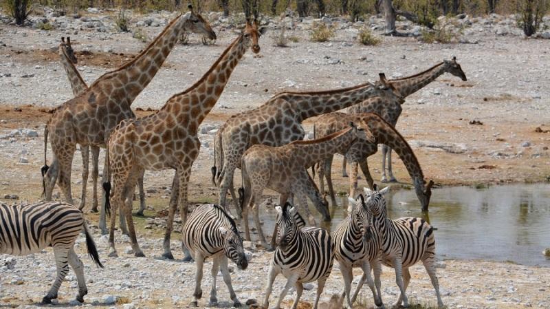 namibija-in-bocvana-2016-2041