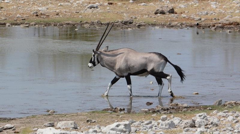 namibija-in-bocvana-2016-2054
