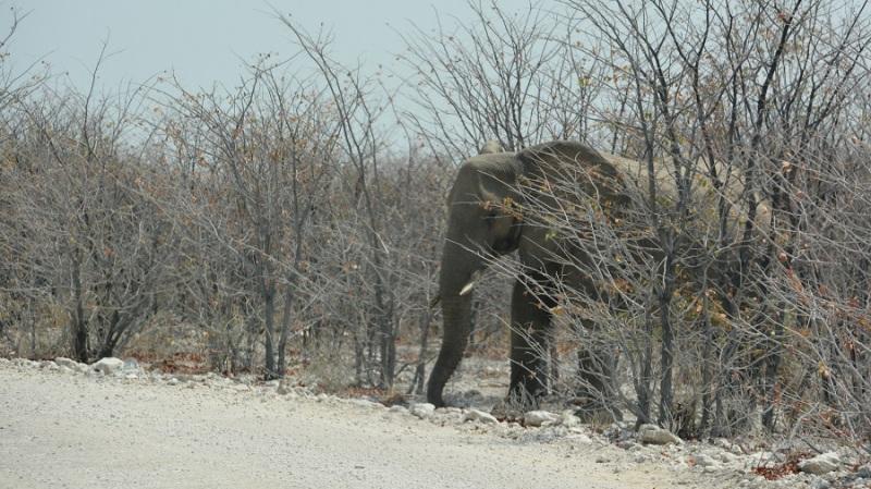 namibija-in-bocvana-2016-2058