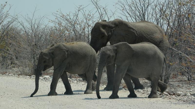 namibija-in-bocvana-2016-2065