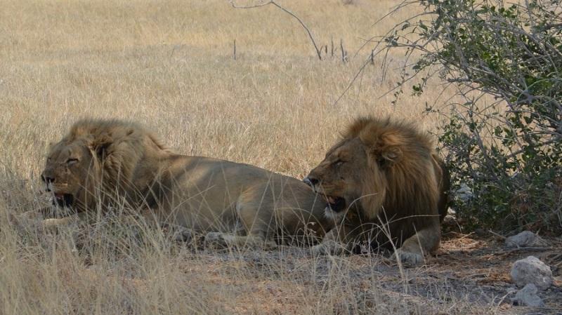 namibija-in-bocvana-2016-2080