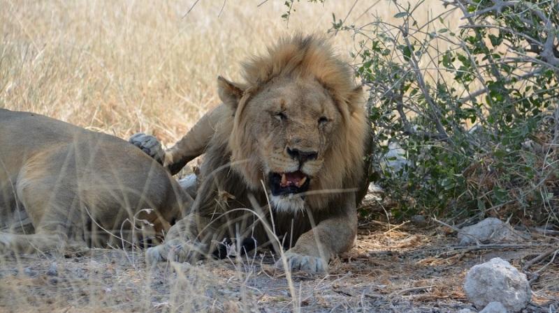namibija-in-bocvana-2016-2081