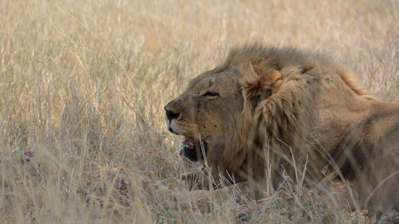 namibija-in-bocvana-2016-2088