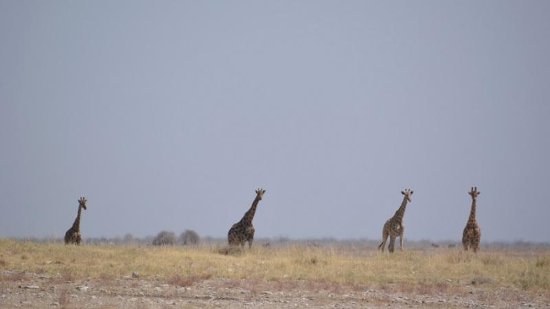 namibija-in-bocvana-2016-2143