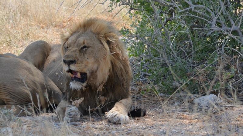 namibija-in-bocvana-2016-2157