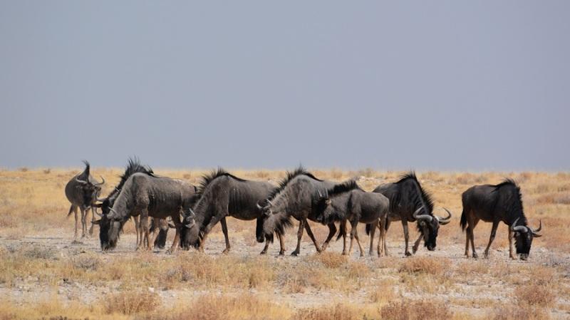 namibija-in-bocvana-2016-2192