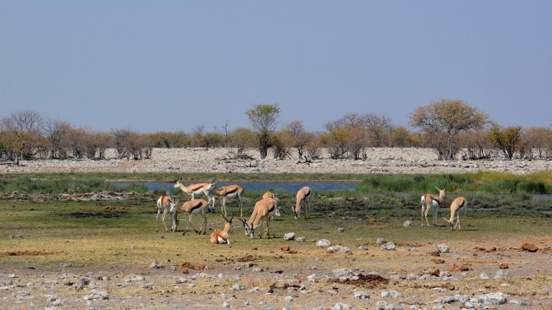 namibija-in-bocvana-2016-2202