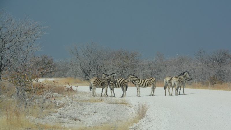 namibija-in-bocvana-2016-2205