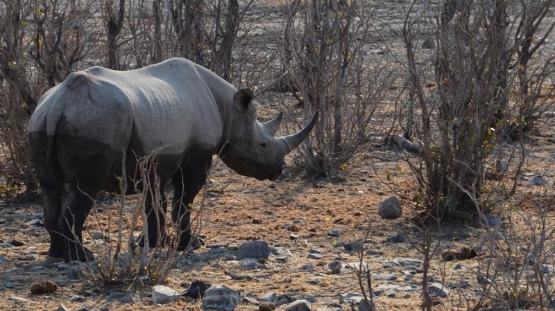 namibija-in-bocvana-2016-2211