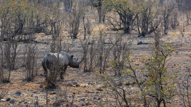 namibija-in-bocvana-2016-2213