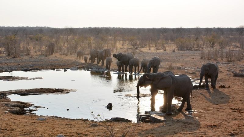 namibija-in-bocvana-2016-2236