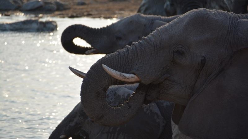 namibija-in-bocvana-2016-2253