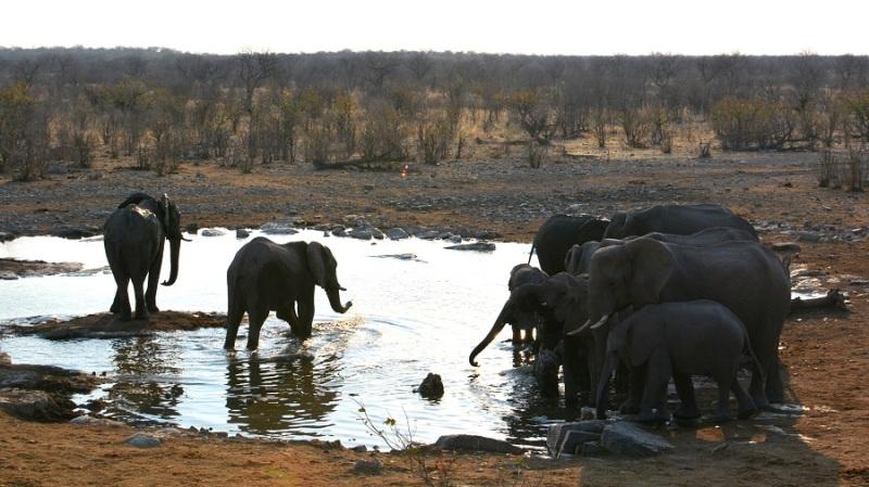 namibija-in-bocvana-2016-2254