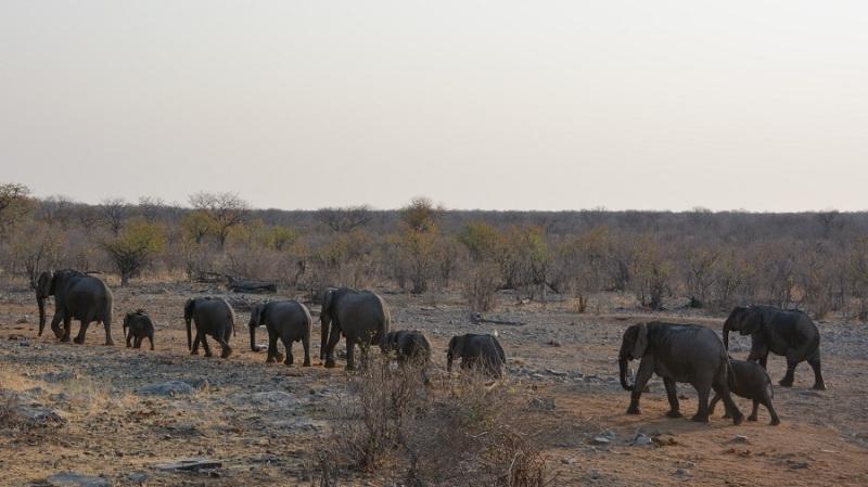 namibija-in-bocvana-2016-2268