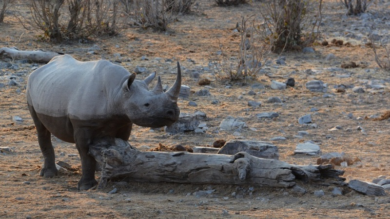 namibija-in-bocvana-2016-2276
