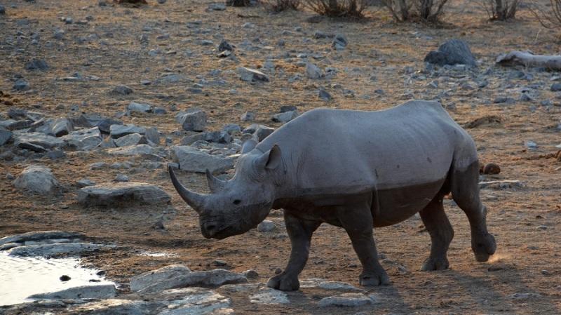 namibija-in-bocvana-2016-2279