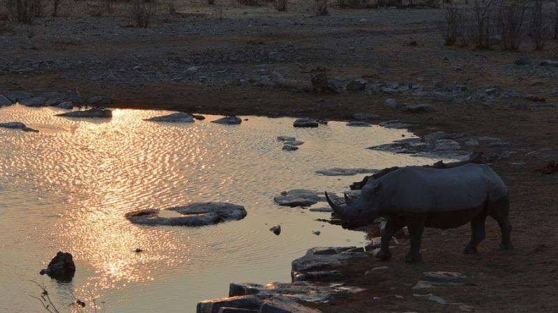 namibija-in-bocvana-2016-2291