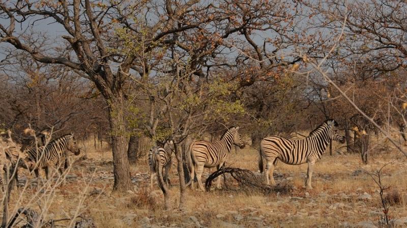 namibija-in-bocvana-2016-2351