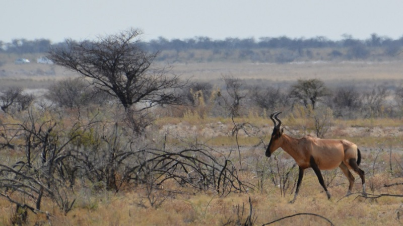 namibija-in-bocvana-2016-2387