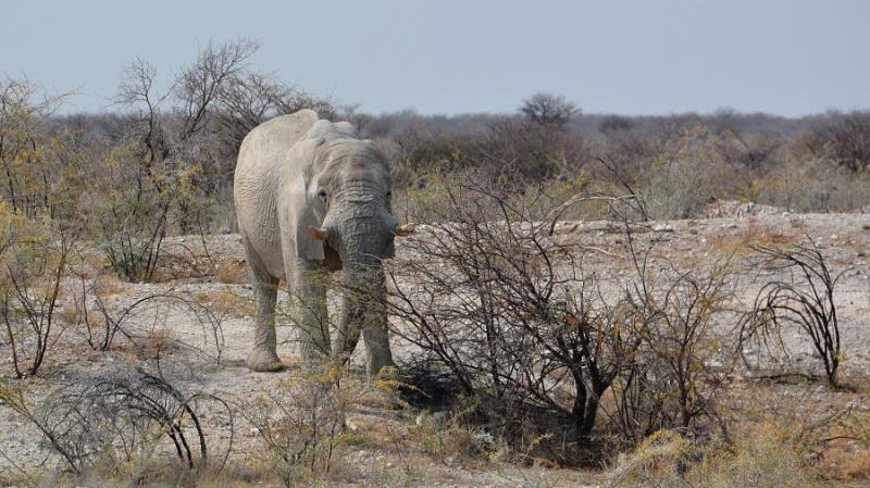 namibija-in-bocvana-2016-2389