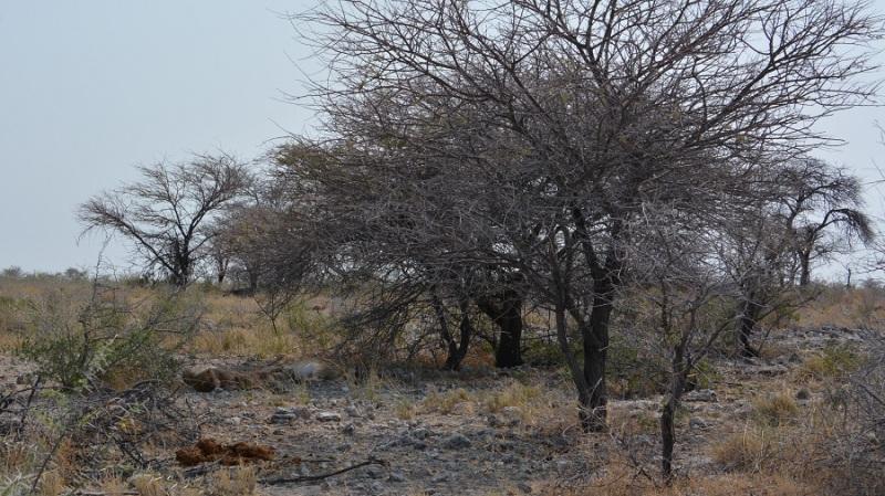 namibija-in-bocvana-2016-2402