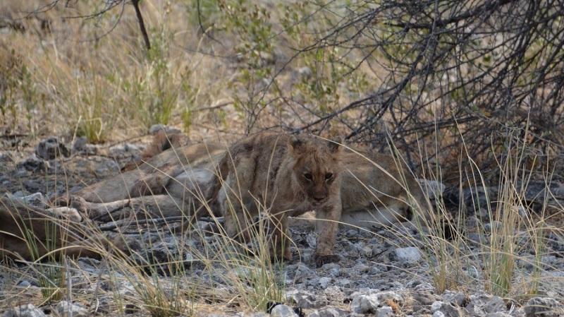 namibija-in-bocvana-2016-2413