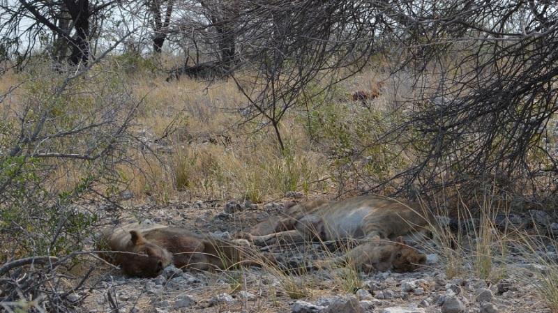namibija-in-bocvana-2016-2417