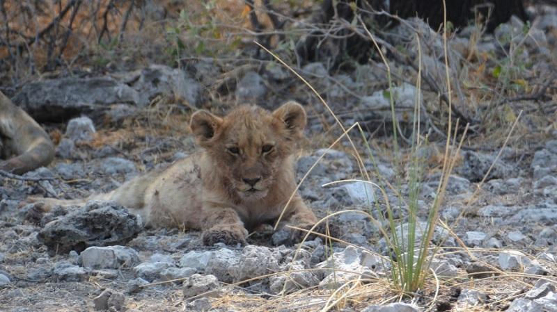 namibija-in-bocvana-2016-2438
