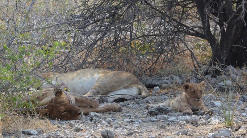 namibija-in-bocvana-2016-2442