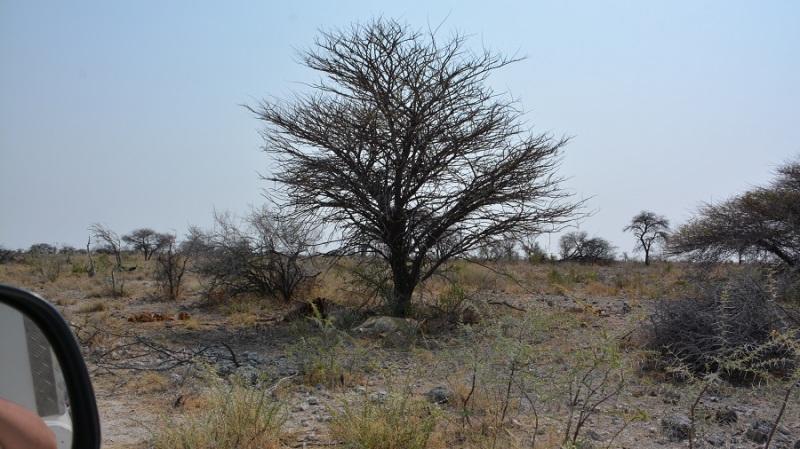namibija-in-bocvana-2016-2444
