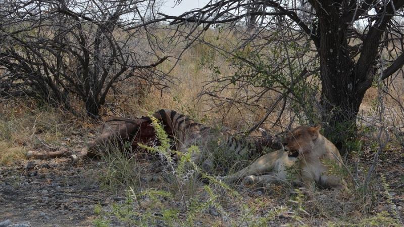 namibija-in-bocvana-2016-2461