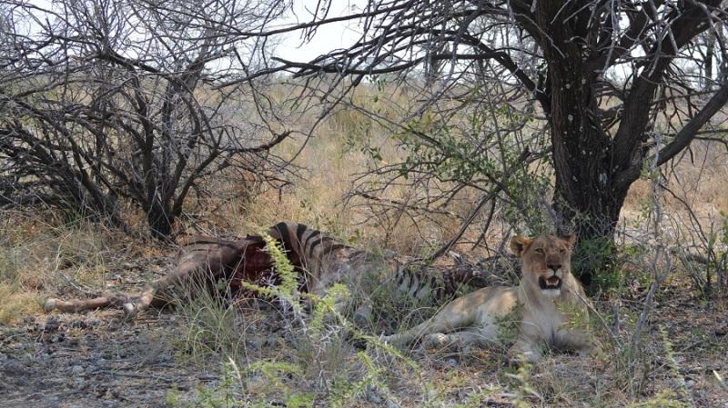 namibija-in-bocvana-2016-2471