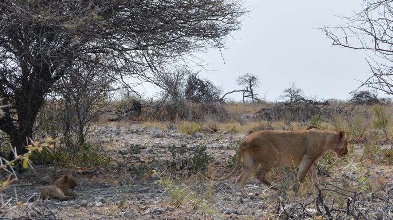 namibija-in-bocvana-2016-2473