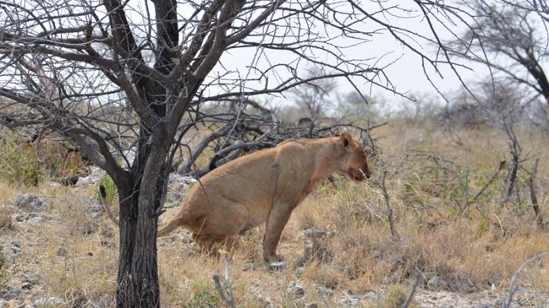 namibija-in-bocvana-2016-2476