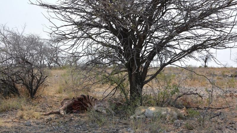 namibija-in-bocvana-2016-2478