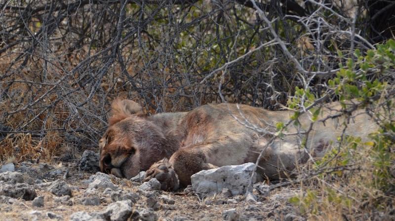 namibija-in-bocvana-2016-2482